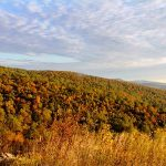 Best Spot for Enjoying Foliage in Northern Virginia
