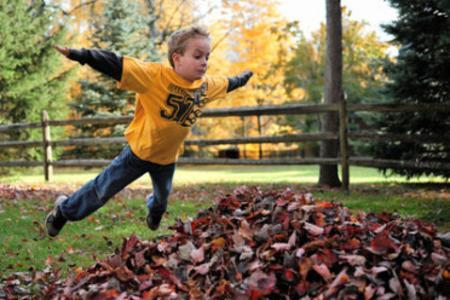 Five Fall Gardening Tips