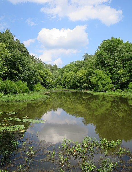 Lake Chesdin