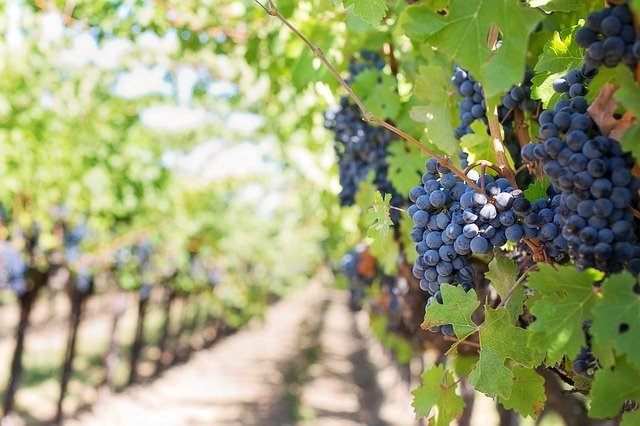 Northern Virginia Vineyards