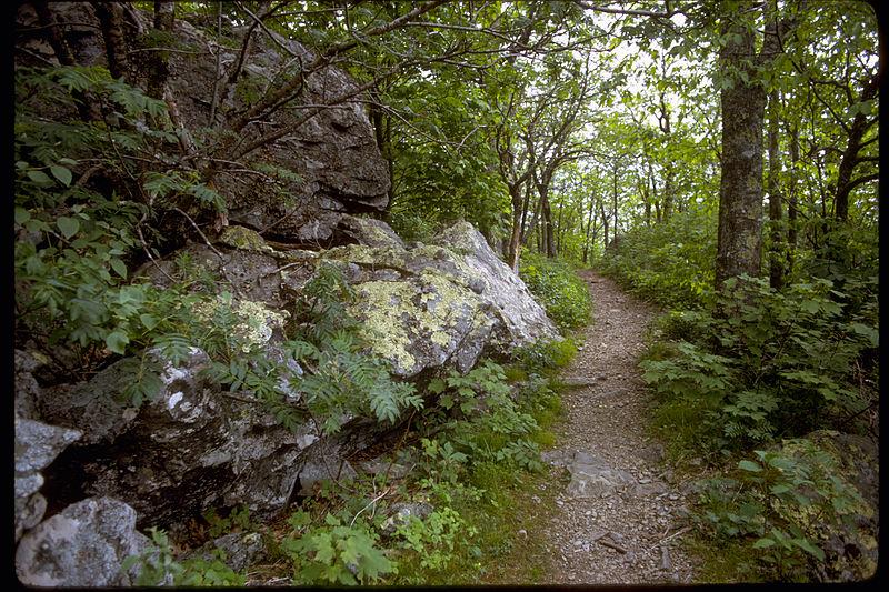 Scenery in Northern Virginia