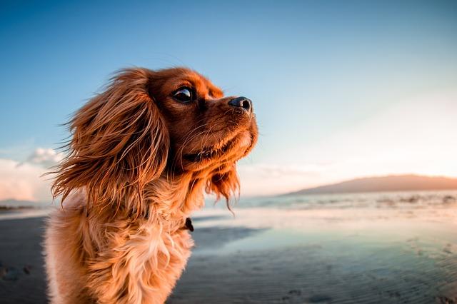 Northern Virginia Dog Beaches
