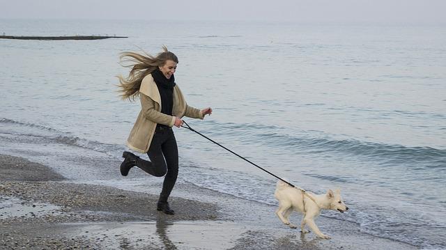 Virginia Dog Beaches