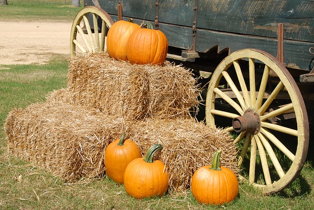 Northern Virginia Pumpkin Patches