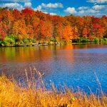 Fall Foliage NoVA